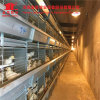 Chicken Farm Equipments Poultry Layer Chicken Cage