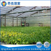 China Greenhouse for Greens Agriculture Greenhouse Film Greenhouse