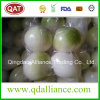 Fresh Peeled Chilled Onion with Vacuum Pack
