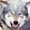 Wolf Family Beautifulle Handmade Diamond Painting Ljz001