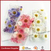 Transparent Floral Pressed Protective Back Cover for iPhone 7