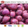 Top Quality Fresh Red Onion for Exporting