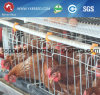 20, 000 Birds Farm Equipment Cage for Zambia (A-4L120)