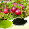 Cranberry Extract 25%-30% Proanthocyanidins Powder
