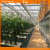 Long Life-Span Agricultural Venlo Type Greenhouse