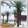 Outdoor Decoration Fake Artificial Date Palm with High Quality