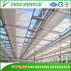 Ecological Environmental PC Sheet Multispan Greenhouse with Misting System