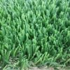 Good Quality Turf Grass Lawn Artifical for Garden Landscaping