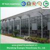Hot Sale Automatic Control System Glass Green House for Vegetable