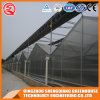 Multi-Span Stainless Steel/ Aluminum Profile Polycarbonate Sheet Greenhouse for Fruit