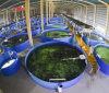Glass Fiber Reinforced Plastic Fish Tank Special for Fish Farming