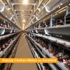 China fully automatic chicken poultry farm equipment price