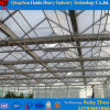 Multi-Span Commercial PC Sheet Greenhouses for Cucumber