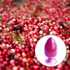 Cranberry Extract Anthocyanidins Anthocyanins 25% 36%