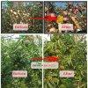 Increase Plants' Chlorophyll Content 98%Tc Da-6 (10369-83-2)