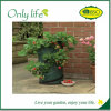 Onlylife Grow in Small Urban Spaces Felt Vegetables Grow Bag