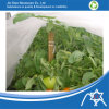 Spunbond Nonwoven Cover for Vegetable