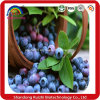 High Quality Food Supplement Ingredient Blueberry Powder with Anthocyanin 15%by HPLC 25% by UV