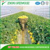 Best Qualtiy with Best Price for Single Span Arch Greenhouses for Agriculture/Farming