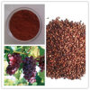 Natural Water Soluble Grape Seed Extract (high orac value) . Grape Seed Extract 95%
