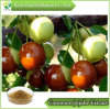 Commom Jujube Extract