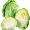 Hot Sale Fresh Cabbage From China Fresh Vegetables