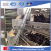 Automatic Chicken Raising Layer Cages (A type)