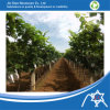 PP Nonwoven Fabric for Fruit Cover Bag, Garden Tool