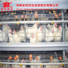 Automatic Chicken Cage System Poultry Farm Equipments