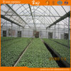 Good Appearance Plastic Film Multi-Span Greenhouse