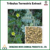 Tribulus Terrestris Powder Extract with Quality Saponin
