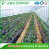 New Style Easy Assembled Wall-Less Solar Green House for Fruit Picking/Strawberry Picking/ Tourism/Tomato Cultivation