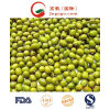 Hot Sale Competitive Mung Bean