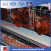 High Quality Automatic Chicken Cage System From Jinfeng