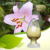 Factory Supply 50% 95% 98% Natural Kaempferol