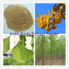 Ginko Biloba Leaves Extract Powder (N. L. T. 24% Flavones Glycosides)