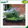 Onlylife Waterproof PVC Plastic Sheet Transparent Garden Greenhouse Vegetable Growing