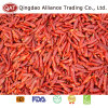 Red Dry Chili for Exporting