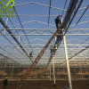 Polycarbonate PC Sheet Multi-Span Greenhouse