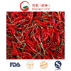 Dp (dehydrated) New Crop Red Chili