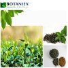 ISO Certificate Green Tea Extract L Theanine Powder, L-Theanine 60%