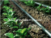 PE Cylindrical Type Drip Irrigation Pipe