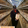 H Frame/ Type Broiler Chicken Coop of Poultry Farm Equipment