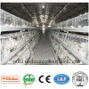 Automatic Battery Broiler Pullet Layer Chicken Cages System