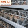 Pullet Chicken Cage System From Poul Tech