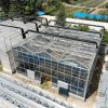 Xinhe Heating Solar Systems Used for Multi-Span Glass Greenhouse