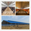 Top-Ranking Steel Structure Prefabricated House for Livestock Farming