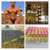 Finished Anabolic Steroid Injectable SUS Vials