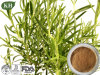Factory Supply 100% Natural Ursolic Acid Supplier/Rosemary Extract Manufacturer