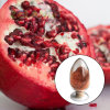 Ellagic Acid / Pomegranate Plant Extract (CAS: 476-66-4)